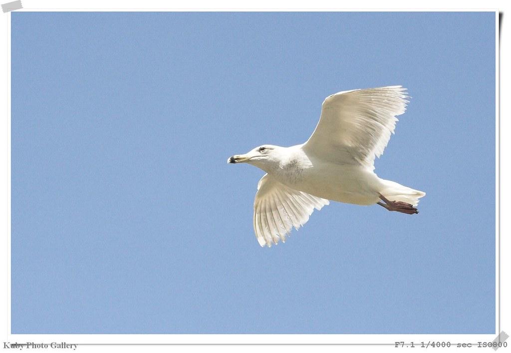 在美國舊金山拍的飛羽