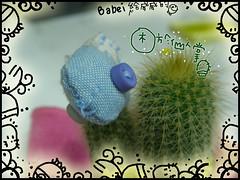 20060905babei給威威的禮物2