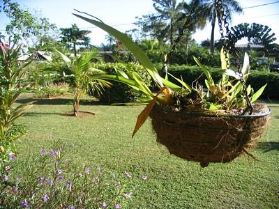Vue de ma fenêtre - Guyane
