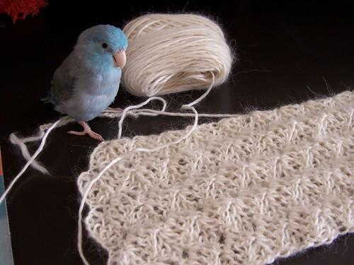 skye and scarf