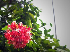 too many flowers (花)
