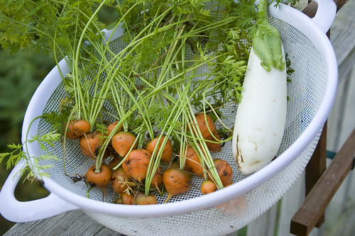 thumbelina carrots and eggplant