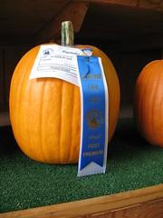 1st prize pumpkin
