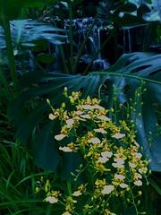 Orchids Botanic Gardens