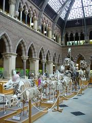 Evolution des squelettes