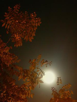 luna y bruma