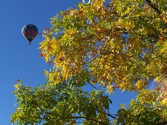 Hot Air Balloon and fall leaves