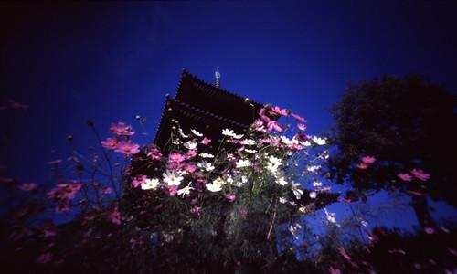 法起寺の画像 p1_34