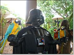 Vader y guacamayos
