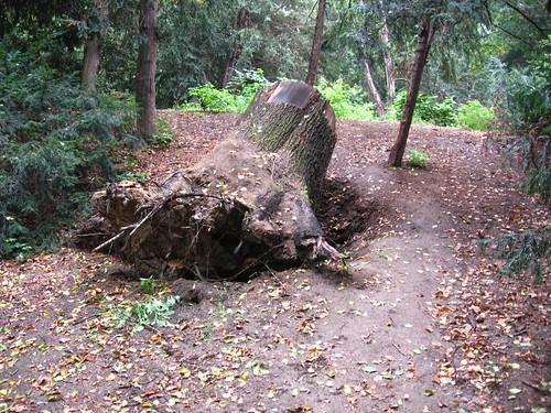 Park Szczytnicki (VI)