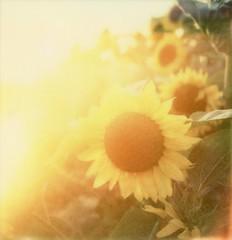 Flower power photo by Blitzwuerfel (flash cube)
