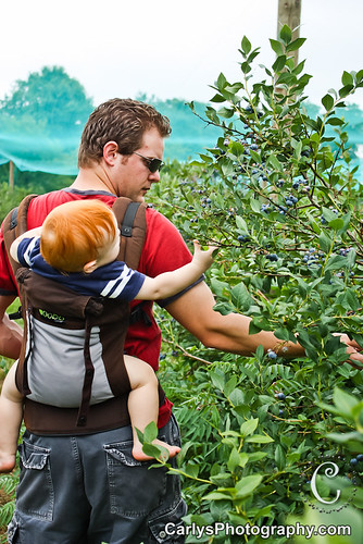 blueberry picking-3.jpg
