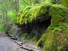 Rocks surrounded by lush green Moss photo by Batikart
