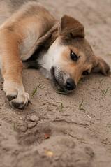siesta photo by simmuhely