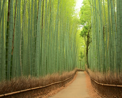 竹林の道 - 嵯峨野 / Bamboo Street - Sagano photo by Active-U