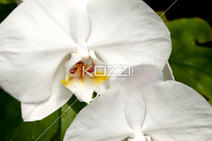 detail view of white orchid photo by malanature8877