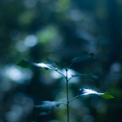 Sunlight on Small Leaves 001 photo by noahbw