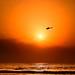 Flying over the sun - Tel-Aviv beach - Follow me on Instagram:  @lior_leibler22