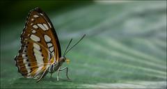 Butterfly 2 photo by Rez J
