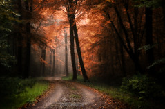 My dreams (BROCELIANDE - BRETAGNE - France) photo by philippe MANGUIN photographies