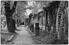 the last alley photo by Violen's photography