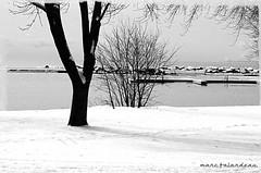 SUMMER WISHES, WINTER DREAMS photo by marc falardeau
