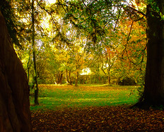 Autumn Dream - Langton, North Yorkshire. By Thomas Tolkien photo by Thomas Tolkien
