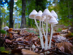 Mushroom Season photo by beppeverge