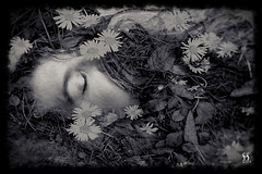 Ophelia photo by Susan Maxwell Schmidt