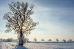 Sun through a winter tree photo by Fredde Nilsson