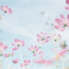 *cosmos photo by fangchun15