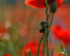 lest we forget photo by jenny downing