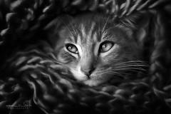 Grey photo by Malia León 