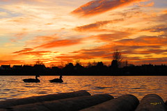 Ducks at Sunset photo by mazzy43