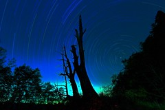 Star Trails over Fuqi Tree (Elevation:2478m) MG_6429 photo by Lobo. Luo