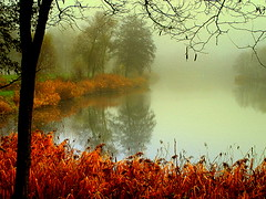 the foggy pond photo by mujepa