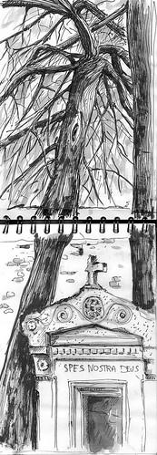 Arbres au cimetière de Cahors
