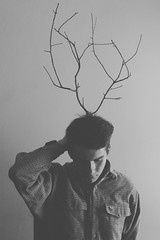 moose photo by Tom ▲