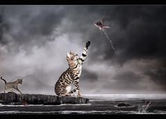 Kitties... photo by Takis Poseidon (RL busy...)