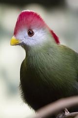Exotic Bird Series photo by pixel_karma