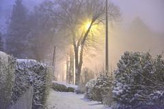 Nuit de neige photo by Bernard LATOUCHE
