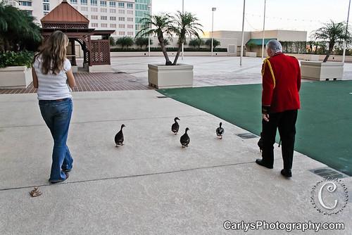peabody hotel duckmaster-2.jpg