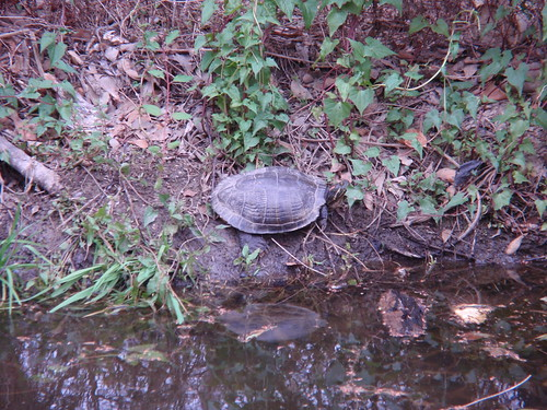 Another Turtle-Spotting