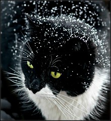 snow cat photo by sillitilly
