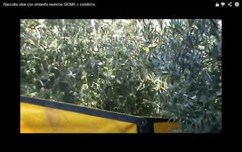olive harvesting machine04