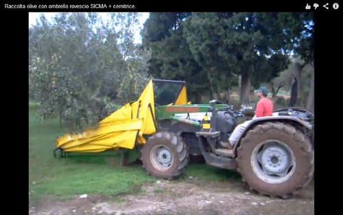 olive harvesting machine01