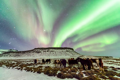 Horses Under the Aurora Borealis photo by Greg Annandale