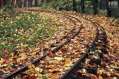 Leafing On A Railroad photo by Ian Sane