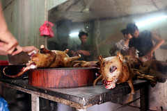 Dog meat market, Hanoi, Vietnam photo by www.igorbilicphotography.com