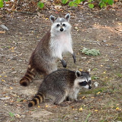 Mother and Child photo by Raccoon Photo